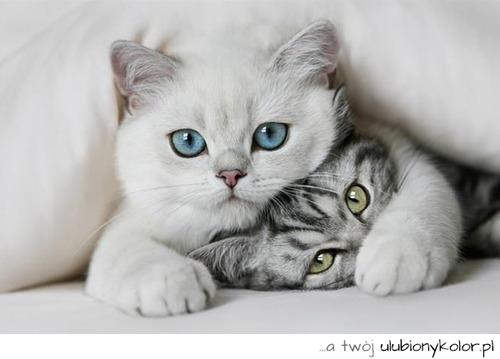 Zdjęcia I Obrazki Oznaczone Tagami Niebieskie Oczy