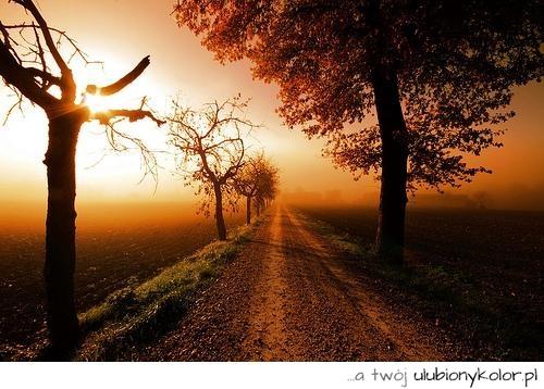 Obrazek Przyroda Natura Droga Zachód Słońce Fotografia